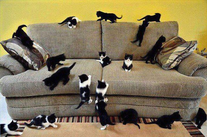 удаление кошачьей мочи с дивана